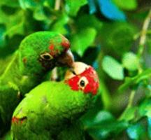 Parrots_181